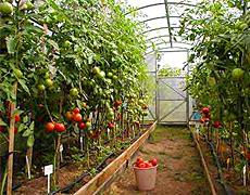 Тепличное хозяйство и Клуб садоводов 2015