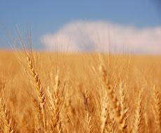 Виставка «Зернові технології-2017»