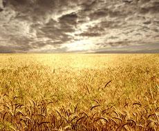 Украина может лишиться хорошего урожая — мнение