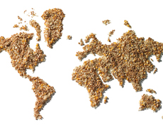 Украина нашла новый рынок сбыта зерна