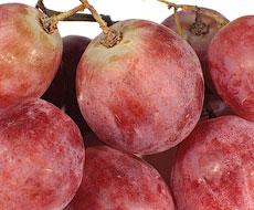 В Украине в 2015 году сократился объем переработки винограда в виноматериалы
