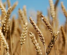 Существуют трудности с выдачей сертификата EUR.1 на украинское зерно и растительное масло – УЗА