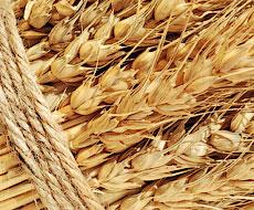 Мировые цены на пшеницу сильно
