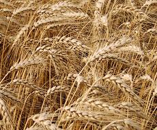 ГПЗКУ заняла второе место по экспорту зерновых
