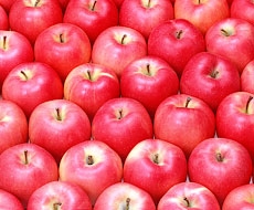Активизировались продажи украинских яблок