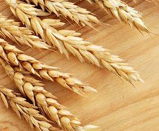 Госкорпорация Украины на втором месте по экспорту зерновых