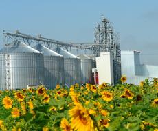 Завод по переработке масличных на Сумщине построят к 2017 г.