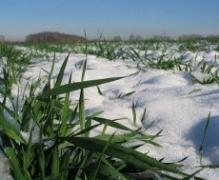 Снегопад спас харьковские озимые