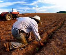 Посевная на 84% будет профинансирована за счет аграриев