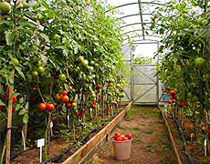 Выставки «Тепличное Хозяйство» и «Коммерческое Садоводство»