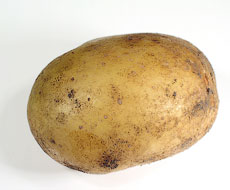 Китайцы создали удобрение из картофельных отходов