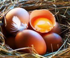 Производство яиц уменьшилось на 2,8 млрд штук — Карпенко