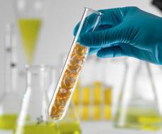 Индонезия признала украинскую исследовательскую лабораторию — Госветфитослужба