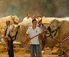 Украине необходимо внедрить современную систему селекционно-племенной работы в животноводстве – эксперт