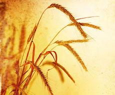 80% сделок по зерну в Египте будет осуществляться на аграрной бирже