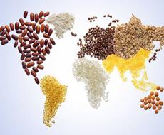 Откуда и сколько сельхозпродукции импортируется в Украину