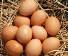 В Украине в январе рекордно упало производство яиц