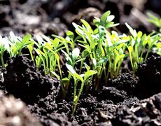 Украинские аграрии начали сев ранних яровых зерновых