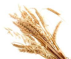 В Черкасской области планируется увеличить площадь сева яровых зерновых на 10%