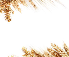 Мировые цены на пшеницу опустились до 6-летнего минимума