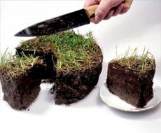 В Винницкой области инвесторы взяли в аренду шесть земельных участков для ведения агробизнеса