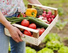 Цены на украинскую плодоовощную продукцию падают из-за низкого спроса