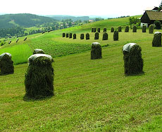 Украина увеличит площадь весеннего сева на 1,7 млн. га