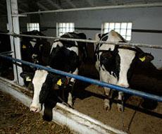У Vitagro заработала новая система содержания коров