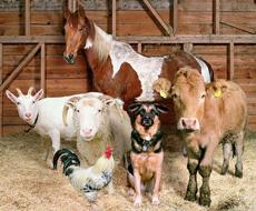 В Украине сократилось поголовье скота и птицы