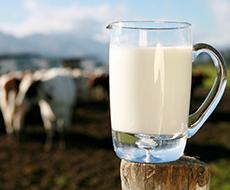 В Ровенской области растет производство молока