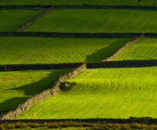 15% земель приватизируемых предприятий хотят передать в собственность местных общин