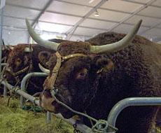 Из-за отсутствия покупателей молока в Луганской области готовы вырезать рогатый скот