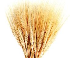 Египет: среди победителей тендера вновь украинская пшеница