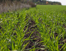 В Украине ранними зерновыми к 18 марта засеяно более 580 тыс. га