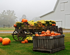 Количество личных сельских хозяйств уменьшилось на 30 тыс.