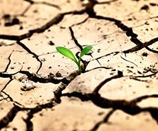 Засушливые погодные условия сократят сбор зерновых в Украине