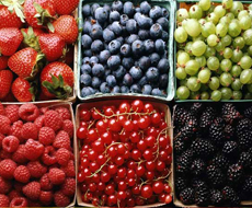 Украинские ягоды уже в 2016 году могут оказаться на рынке Скандинавии