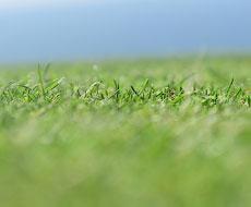 Погода в начале апреля способствовала активной вегетации озимых и яровых – Укргидрометеоцентр