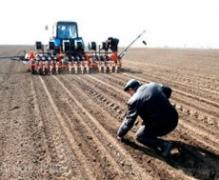 В Україні посів ранніх зернових культур проведено на площі 2,3 млн га
