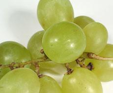 Импорт винограда составил 1166 тонн в марте