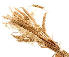 Експерти прогнозують Україні нові рекорди з експорту зерна