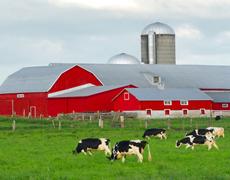 На Полтавщині планують будівництво 12 нових сімейних молочних ферм