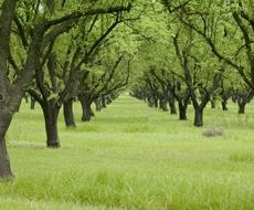 Від граду на Миколаївщині постраждали сади та виноградники