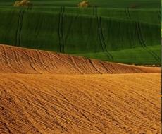 Законопроект об обороте земель сельхозназначения в Украине будет зарегистрирован до ноября