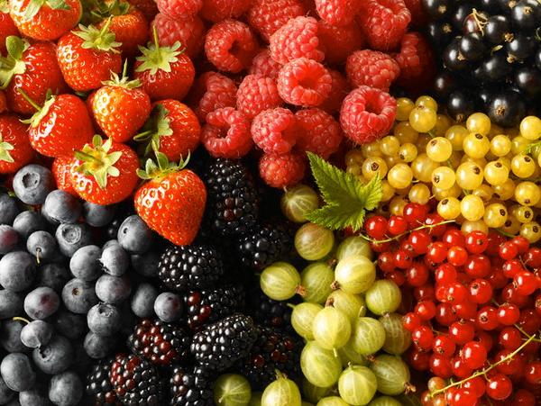 Цьогорічний врожай ягід в Україні може скласти близько 190 тис. тонн