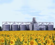 В пиковый период в зернохранилищах Украины накапливается всего 40% зерновых и семян подсолнечника