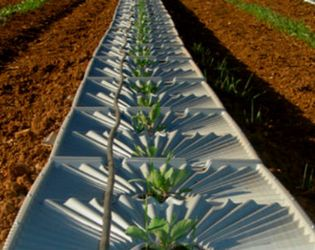 Ізраїль передасть свій досвід зрошення для реалізації проектів на півдні України