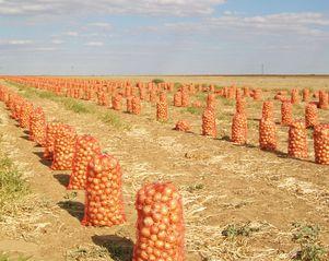 Індонезія має потребу в українській рослинній продукції