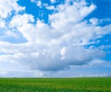 У Запорізькій області погода сприяє майбутньому врожаю