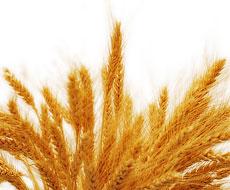 Иордания закупила 100 тыс. тонн пшеницы